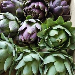 アーティチョーク 6個(野菜)
