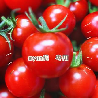 ミニトマト 4kg(野菜)