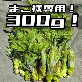 まこ様専用 コシアブラ!(野菜)