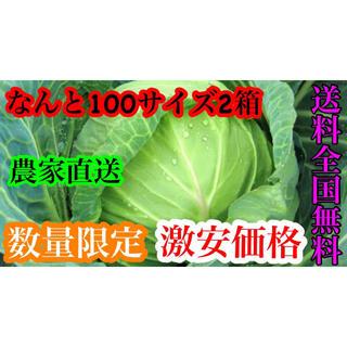農家直送キャベツ約100サイズなんと2箱発送送料無料(野菜)