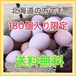 コーチン180(野菜)