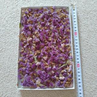 ドライフラワー  乾燥  スターチス  紫  パープル  大量(ドライフラワー)
