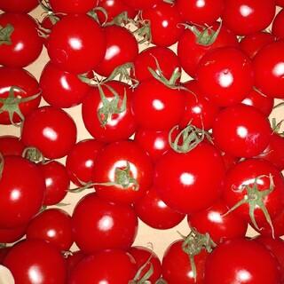 ミディトマト約2K(野菜)
