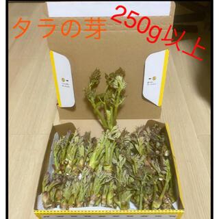 タラの芽250g +おまけ(野菜)
