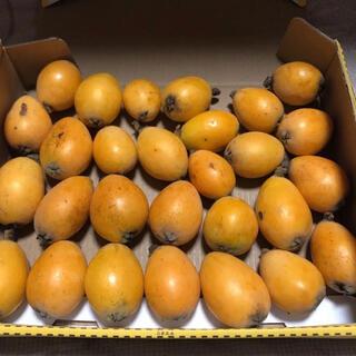 熊本県産 無農薬 ビワ 1キロ(フルーツ)