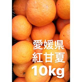 愛媛県産 紅甘夏 10kg