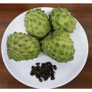 沖縄本島産 高級フルーツ、アテモヤの種子30粒(フルーツ)