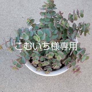 こむいち様専用ページ(その他)