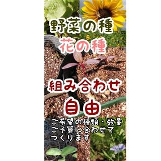 エゴマセット100粒×2 野菜の種 花の種(その他)
