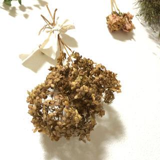 アナベルのブラウンスワッグ アンティーク ドライフラワー 花材 素材 X(ドライフラワー)