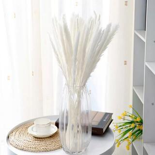 パンパスグラス ホワイト 10本(ドライフラワー)