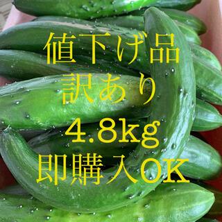 値下げ品 農家直送 きゅうり 訳あり 4.8kg キュウリ 野菜