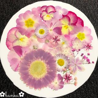 ✿押し花素材✿直径約7cmガーベラ入りピンク系アソート【25枚】