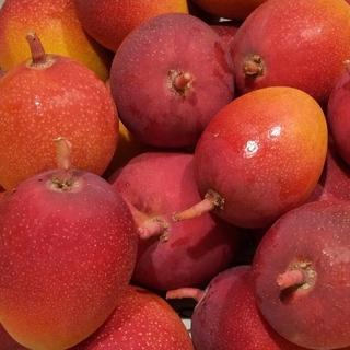 宮崎県産ミニマンゴー 2キロ(フルーツ)