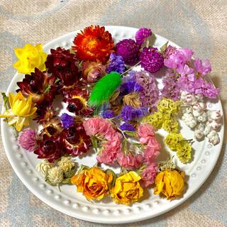 ④ドライフラワー花材セット(ドライフラワー)