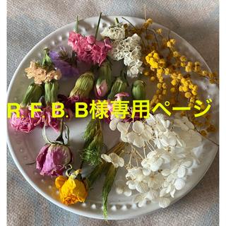 ⑤ドライフラワー花材セット(ドライフラワー)