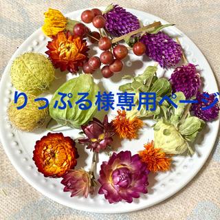 ⑥ドライフラワー花材セット(ドライフラワー)