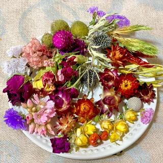 ⑧ドライフラワー花材山盛りセット(ドライフラワー)