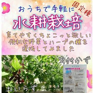水耕栽培用種子 固定種 オススメセット 野菜の種 ハーブの種 ベランダ栽培(野菜)