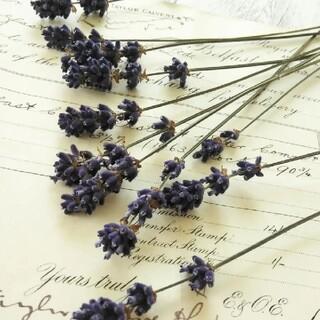 富良野産*ラベンダー  濃紫 10本(ドライフラワー)