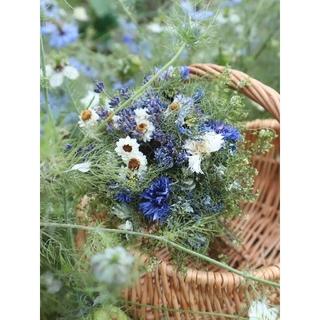 雨上がりの畑より❁初夏の花ニゲラとラベンダーのブーケ。ドライフラワースワッグ(ドライフラワー)