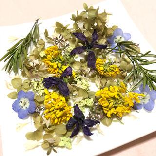 小さな小さなお花の花材 ネモフィラ 菜の花 矢車草 ナチュラル 素材  Z(ドライフラワー)