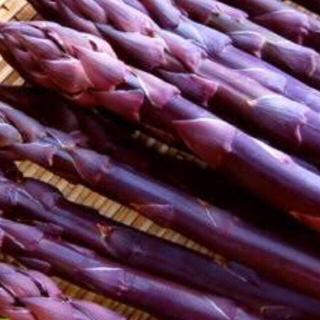 野菜の苗 紫アスパラガス 苗 3本(野菜)