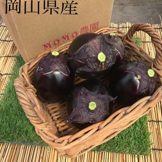 朝採りたて賀茂茄子8個 岡山県産(野菜)