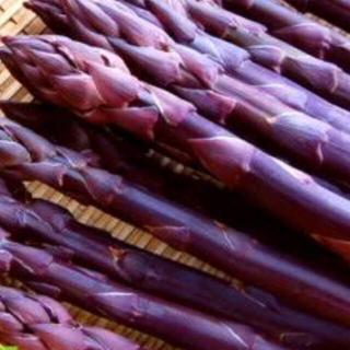 野菜の苗 紫アスパラガス 苗 5株(野菜)