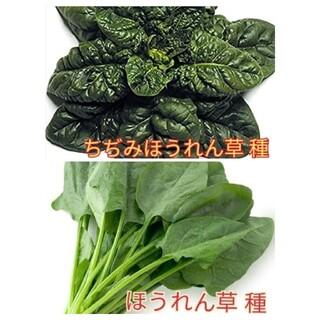 野菜種☆ほうれん草 ちぢみほうれん草☆変更→カラフル人参 空芯菜 スープセロリ(野菜)