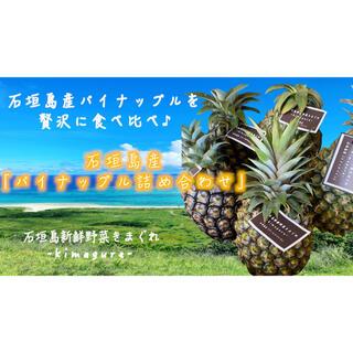 採れたて新鮮!石垣島産「パイナップル詰め合わせ」(フルーツ)
