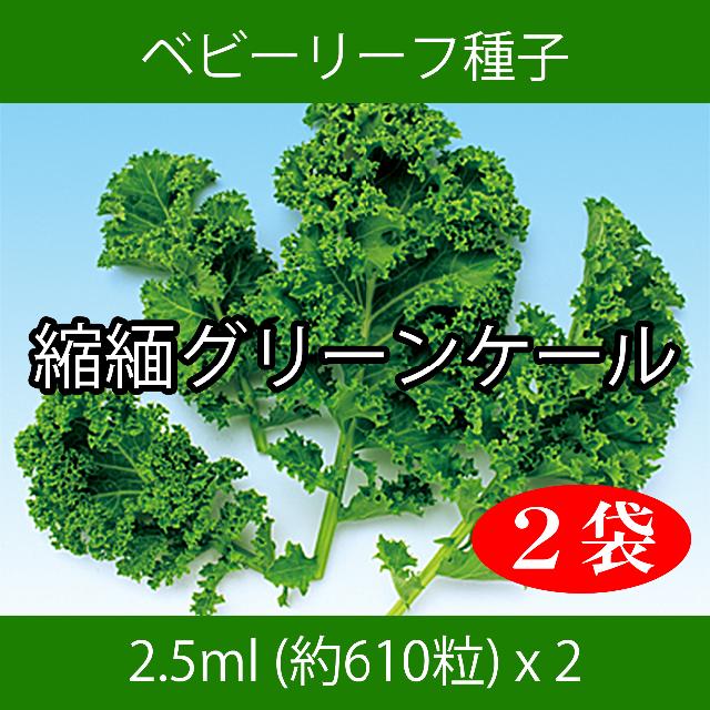 ベビーリーフ種子 B-08 縮緬グリーンケール 2.5ml 約610粒 x 2袋 食品/飲料/酒の食品(野菜)の商品写真