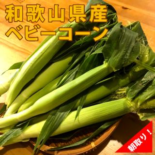 ヤングコーン ベビーコーン【和歌山県】朝どり★20本入り★(野菜)
