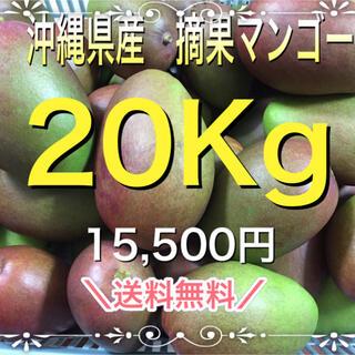 沖縄県産摘果マンゴー20Kg (フルーツ)