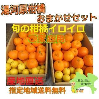かんきつ色々詰合わせ🍊約8kg セット柑橘 ご家庭用 訳あり不選別 数限🉐(フルーツ)