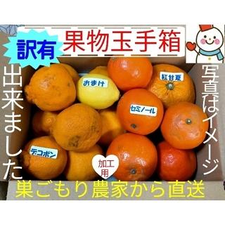 出来ました❗訳有デコちゃんと柑橘仲間♥巣ごもり農家=雪だるまから直送します(フルーツ)