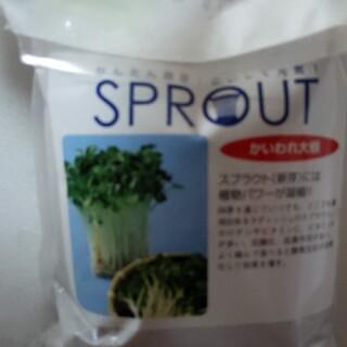 タネ(野菜)