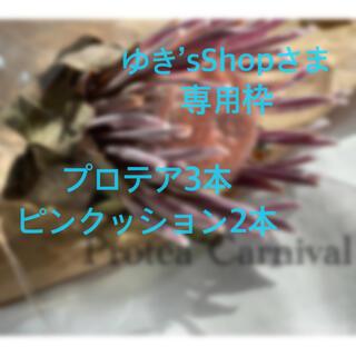 【ゆき'sShopさま専用枠】プロテア3本、ピンクッション2本(ドライフラワー)