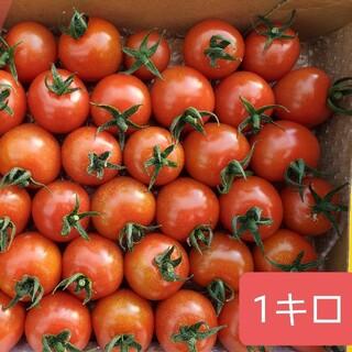 宮崎県産ミニトマトサマーチカ1キロ