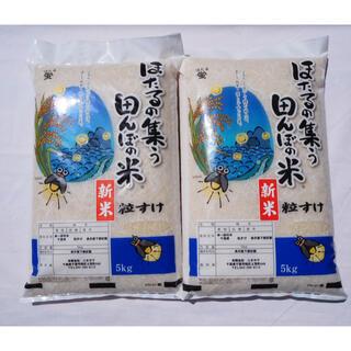 粒すけ 無洗米 10kg (米/穀物)