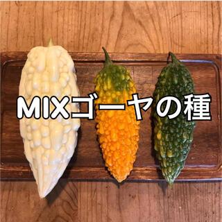 mixゴーヤの種(野菜)