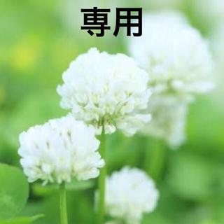 ダイカンドラ13g 、ホワイトクローバー41g   芝生、雑草対策に!(その他)