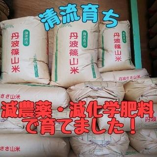 清流育ち 兵庫県丹波篠山米 玄米10kg(減農薬,減化学肥料栽培)(米/穀物)
