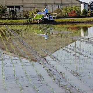 令和2年産茨城コシヒカリ玄米30㎏(米/穀物)