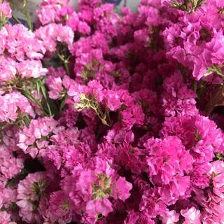 スターチスドライフラワーピンク花材(ドライフラワー)