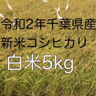 令和2年千葉県産コシヒカリ白米5kg(米/穀物)