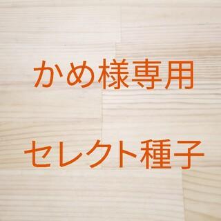 かめ様専用 セレクト種子 3袋(野菜)