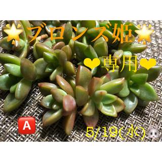 専用❤︎多肉植物❤︎ブロンズ姫❤︎14頭❤︎カット苗🅰️(その他)