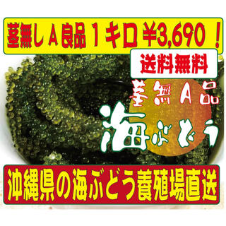 沖縄直送 海ぶどう 1キロ 茎無し A良品 送料無料!(野菜)