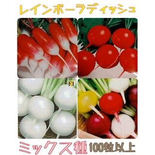 春まき レインボーラディッシュ はつかだいこん 野菜種(野菜)